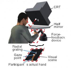 東北大、自己身体近傍空間に特化した新たな視知覚機構を発見