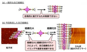 NIMS,分子の自己組織化により1次元分子集合体の長さの制御に成功