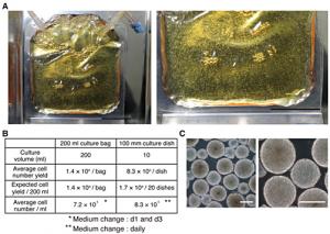 京大と日産化学工業,ヒト多能性幹細胞の大量培養法を開発