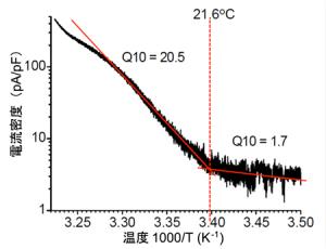 生理研と信州大,温度感受性チャネルTRPA1がカイコの卵の休眠性を決定することを発見