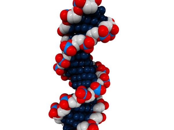 凸版印刷とシスメックス,遺伝子解析・検査事業で提携