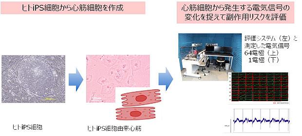 LSIメディエンス,iPS細胞由来の心筋細胞により副作用を高精度に予測するシステムを開発