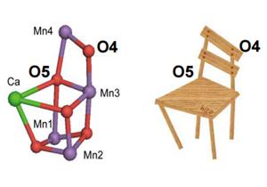 東大,光合成の第1段階の機構を解明