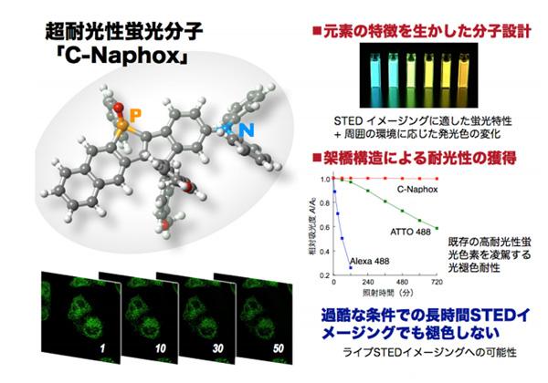 名大,超耐光蛍光イメージング色素を開発