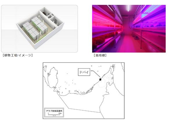 昭和電工ら3社,植物工場を海外で展開